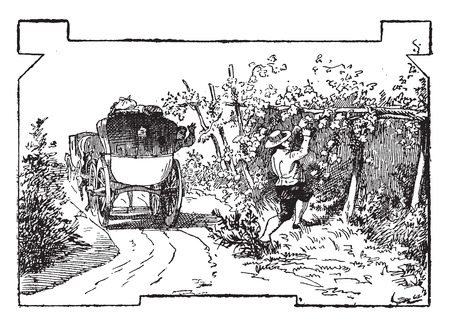 Check stealing grapes, vintage engraved illustration.