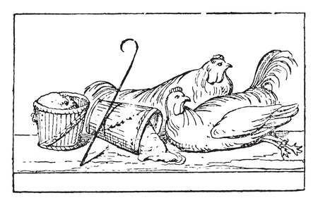 bound: Poultry bound by the legs, vintage engraved illustration. Illustration