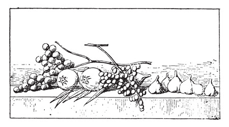 Figs and grapes, vintage engraved illustration. Иллюстрация