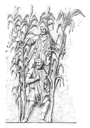 archaeological: B�rbaros en las ca�as, cosecha ilustraci�n grabada. Vectores