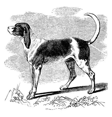 Perro de caza, ilustración de la vendimia grabado. Historia Natural de los Animales, 1880.
