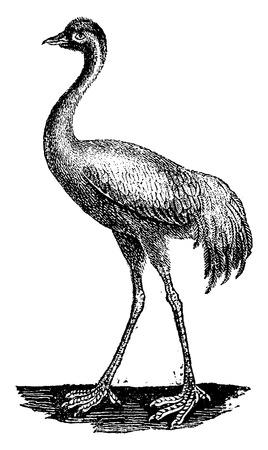 wader: Crane, vintage engraved illustration. Natural History of Animals, 1880.