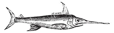 Swordfish, vintage engraved illustration. Natural History of Animals, 1880.