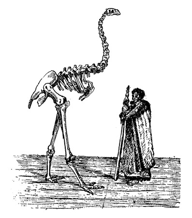 flightless: Dinornis skeleton next to a New Zealander, vintage engraved illustration. Natural History of Animals, 1880. Illustration