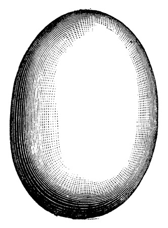 etching: Egg of Aepyornis, vintage engraved illustration. Natural History of Animals, 1880. Illustration
