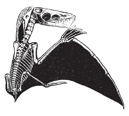 Pterodactyl, vintage engraved illustration. Natural History of Animals, 1880. Vectores