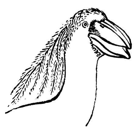 heron: Boat-billed heron or boatbill, vintage engraved illustration. Natural History of Animals, 1880.