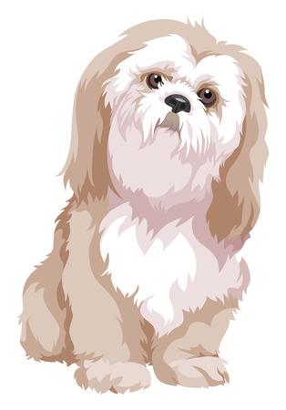 Vector illustration of bolognese dog