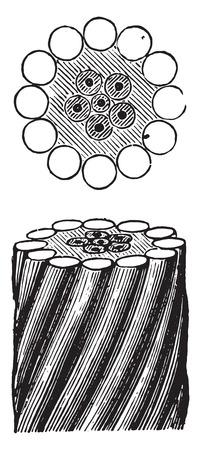 cables: Submarine cable Corsica Piedmont, vintage engraved illustration. Industrial encyclopedia E.-O. Lami - 1875.