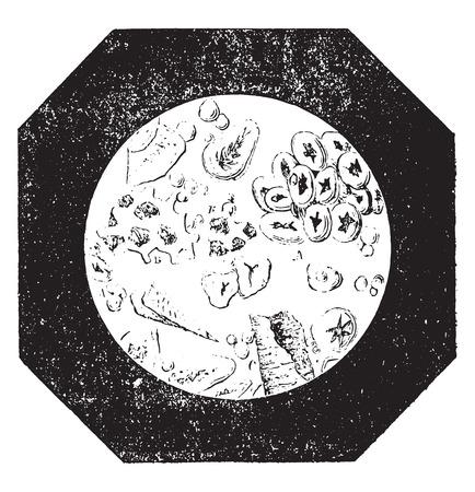 チコリとドングリ、ビンテージの刻まれた図と混ぜ物コーヒー。産業百科事典 e. o.ラミ - 1875年。