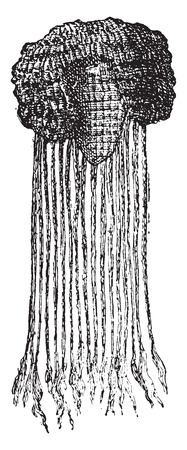 wig: Egyptian wig, vintage engraved illustration.
