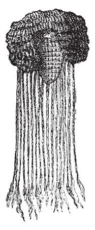 periwig: Egyptian wig, vintage engraved illustration.