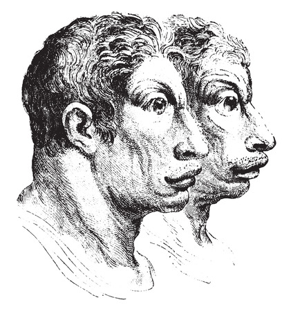 resemblance: Ox, vintage engraved illustration. Earth before man – 1886.