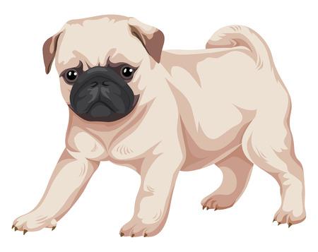Vector illustration of pug dog. Illustration