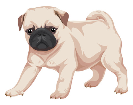 Vector illustration of pug dog. Ilustrace