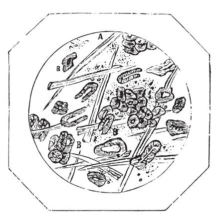 white matter: Ceylon cinnamon powder, vintage engraved illustration. Industrial encyclopedia E.-O. Lami - 1875.