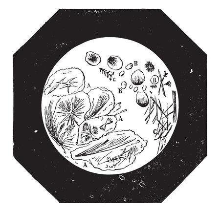 コーヒー、チコリ、ヴィンテージには図が刻まれています。産業百科事典 e. o.ラミ - 1875年。