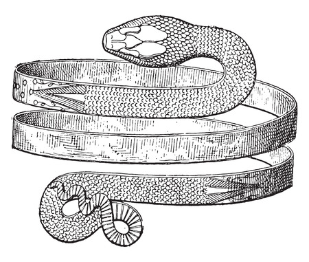 discovered: Bracelet spiral snake discovered in Pompeii, vintage engraved illustration. Private life of Ancient-Antique family-1881. Illustration