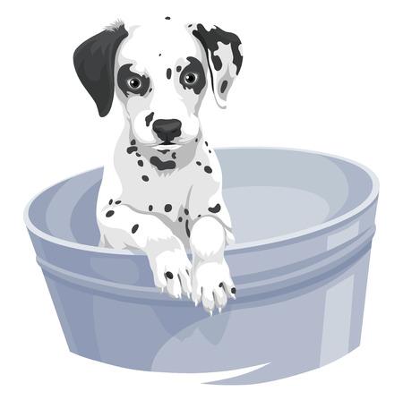 pooch: Vector illustration of dalmation dog in bathtub. Illustration