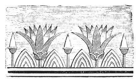 nelumbo nucifera: Lotus flowers, vintage engraved illustration. Industrial encyclopedia E.-O. Lami - 1875.