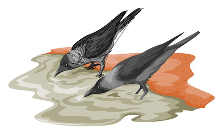 Vector illustration of crow drinking water. Illusztráció