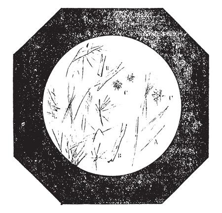 純粋なコーヒー、ヴィンテージには、図が刻まれています。産業百科事典 e. o.ラミ - 1875年。