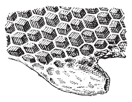 sac: Alveoli, vintage engraved illustration. Dictionary of words and things - Larive and Fleury - 1895.