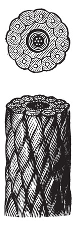 newfoundland: Cables Newfoundland, vintage engraved illustration. Industrial encyclopedia E.-O. Lami - 1875. Illustration