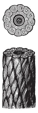 terranova: Cavi Terranova, vintage illustrazione inciso. Enciclopedia Industrial E.-O. Lami - 1875.