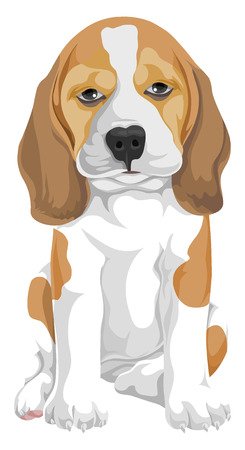 3 669 beagle stock vector illustration and royalty free beagle clipart rh 123rf com bagel clipart beagle clipart black and white