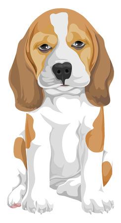 beagle: Vector illustration of dog.