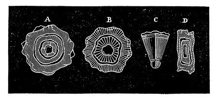 sleet: Cutting hailstones, vintage engraved illustration. Industrial encyclopedia E.-O. Lami - 1875.