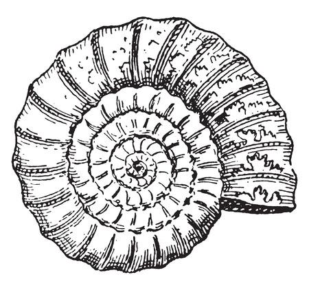 アンモナイト、ヴィンテージには、図が刻まれています。言葉・事・辞典 Larive ・ フルーリ - 1895年。