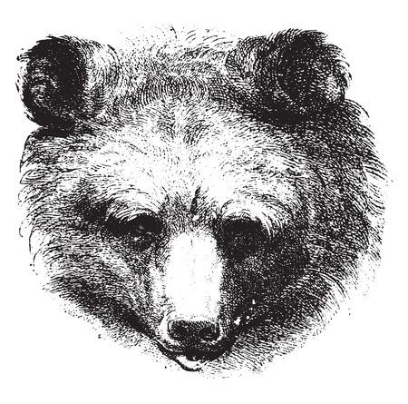 carnivores: Bear, vintage engraved illustration. Earth before man – 1886. Illustration