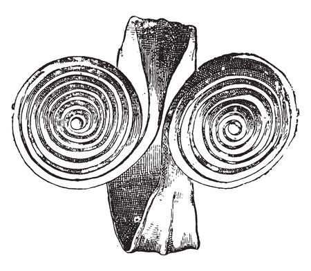 gallic: Gallic Bracelet, vintage engraved illustration.