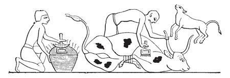 gefesselt: Tiere Marken mit eiserner, Jahrgang gravierte Darstellung. Illustration