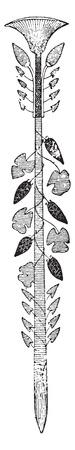 Papyrus, vintage engraved illustration. Ilustração