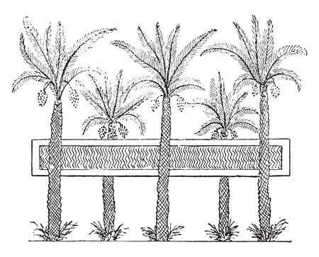vintage drawing: Egyptian garden with a pond, vintage engraved illustration. Private life of Ancient – Antique family – 1881.