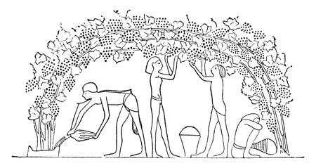 Arbor arranged cradle, vintage engraved illustration. Ilustracja