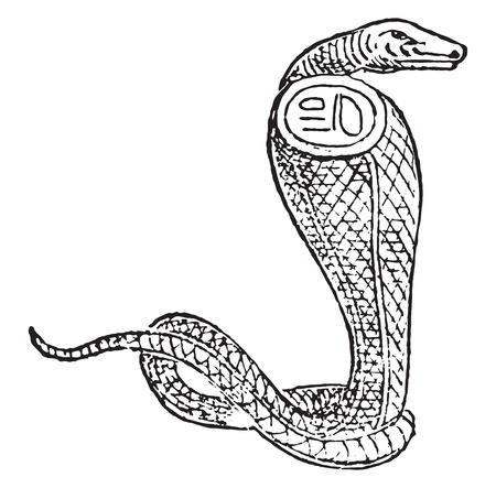 Egyptian jewelry, vintage engraved illustration.