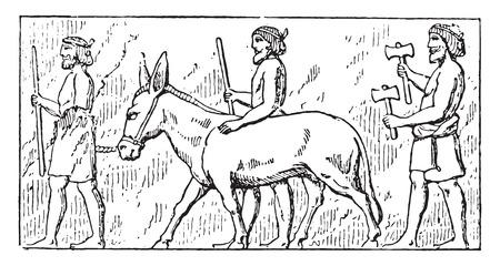 drivers: Donkey drivers, vintage engraved illustration. Illustration