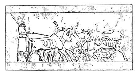 bullock: An Assyrian Cattle, vintage engraved illustration.