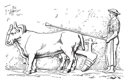plows: Etruscan plow, vintage engraved illustration. Illustration