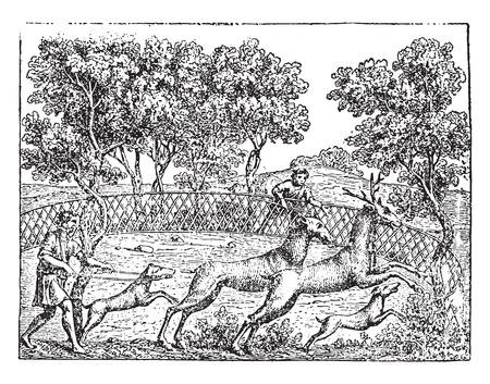 Deer hunting, vintage engraved illustration.