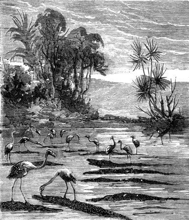 flamingos: Around the world a kid paris, Hunting flamingos, vintage engraved illustration. Journal des Voyages, Travel Journal, (1879-80). Stock Photo