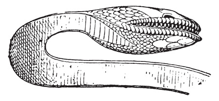 herpetology: Snakes head, vintage engraved illustration. Private life of Ancient-Antique family-1881.