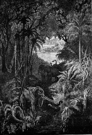 impenetrable: Wild and impenetrable forests, vintage engraved illustration. Earth before man – 1886. Stock Photo