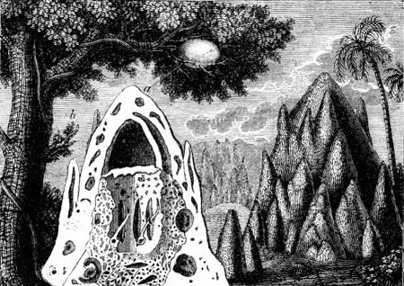 Nidos de termitas, cosecha ilustración grabada. Historia Natural de los Animales de 1880. Foto de archivo - 42943512
