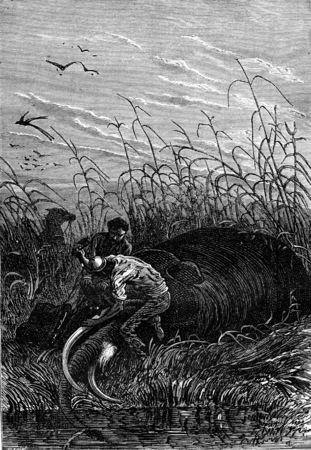 tusks: He cut the tusks, vintage engraved illustration. Jules Verne 3 Russian and 3 English, 1872.