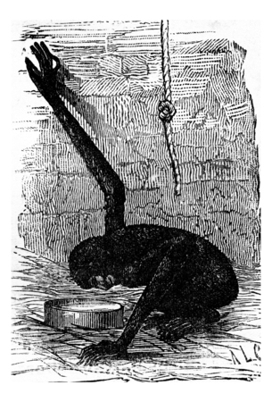 primate biology: The first mirror, vintage engraved illustration. Earth before man – 1886.